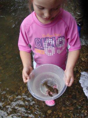 Flusskrebs in der Natur am Wasser bei Natur reality in Lichtenfels, Franken