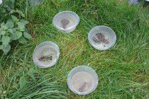 Flusskrebse am Bach gefunden bei Natur reality in Lichtenfels, Franken