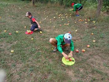 Äpfel mit Natur Reality sammeln in Ebensfeld Franken